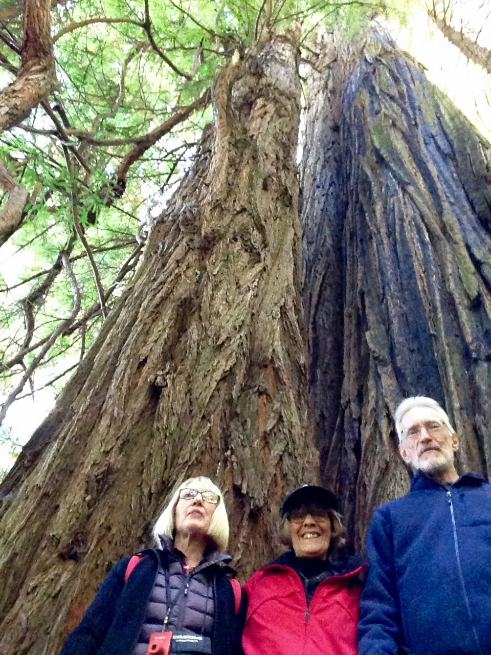 Redwoods 2017 10 01 168 Of 244