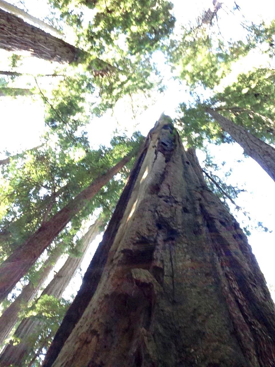 Redwoods 2017 10 01 182 Of 244