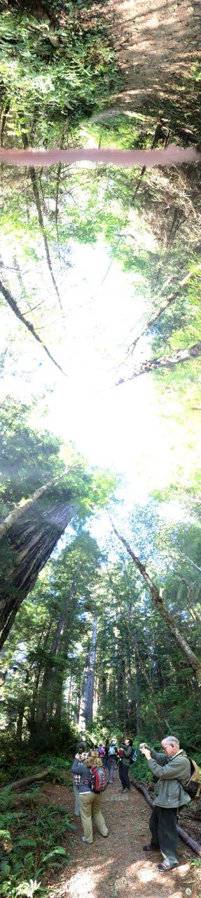 Redwoods 2017 10 01 185 Of 244