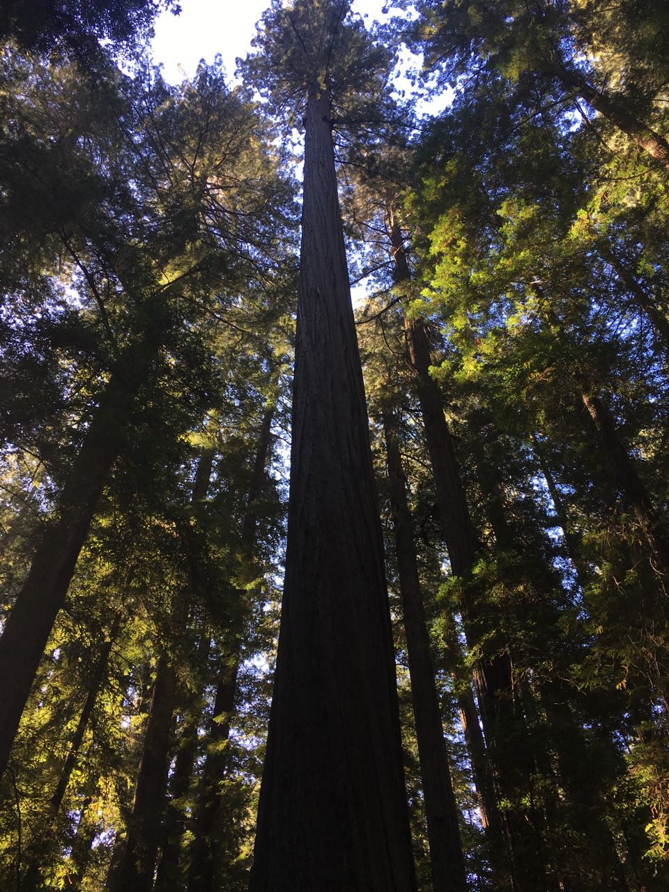 Redwoods 2017 10 01 4 Of 244