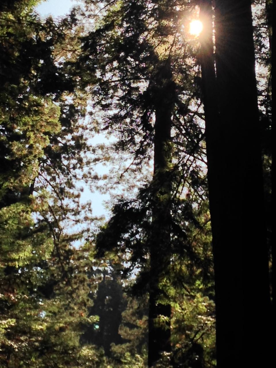 Redwoods 2017 10 08 226 Of 287