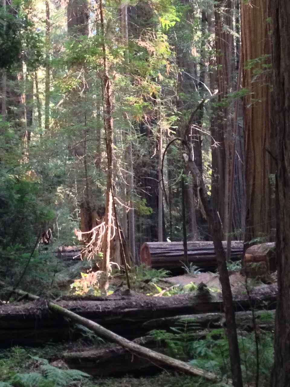 Redwoods 2017 10 08 26 Of 287