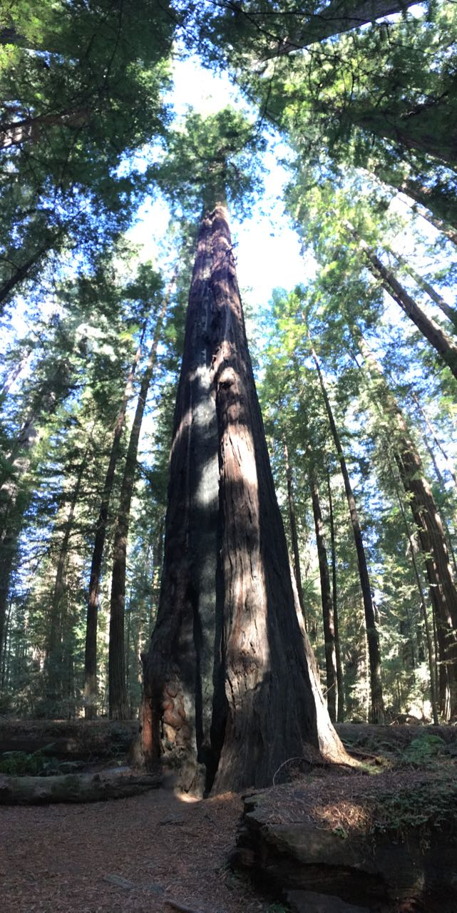 Redwoods 2017 10 08 40 Of 287