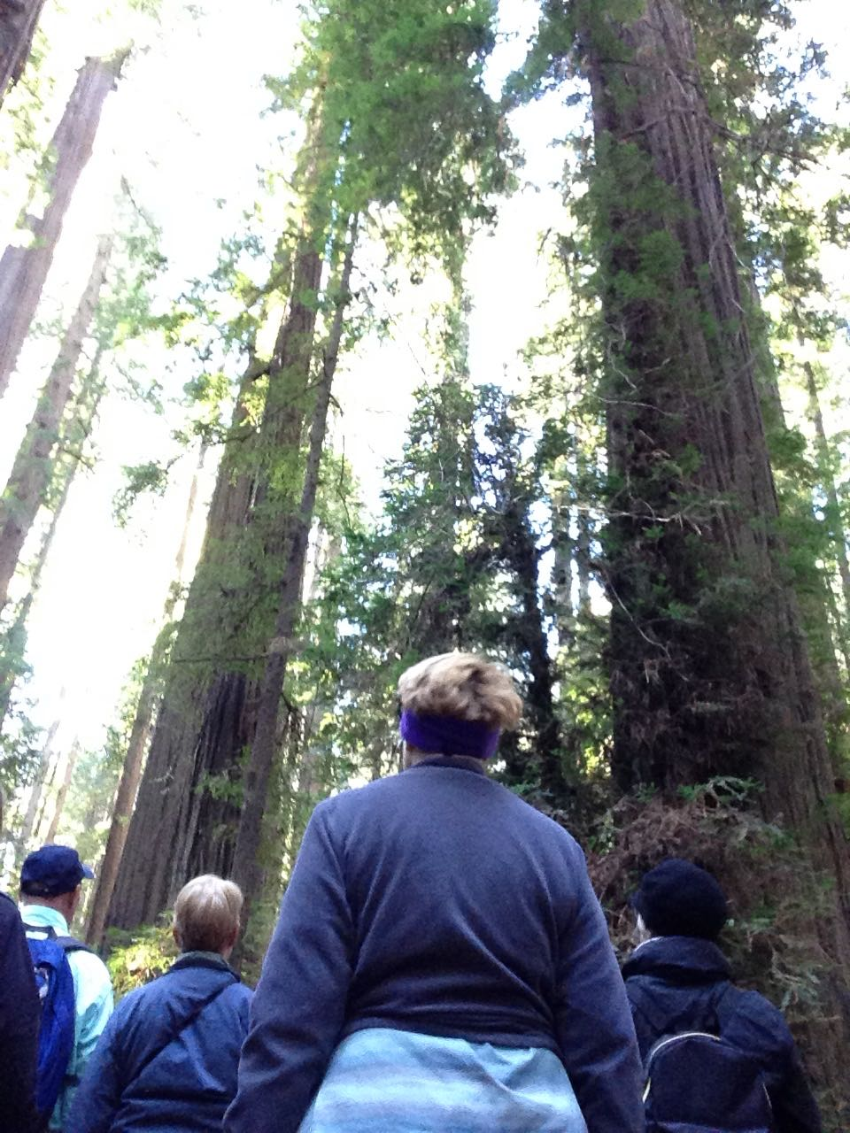 Redwoods 2017 10 08 9 Of 287