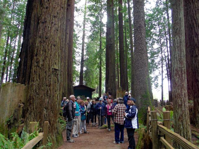 2018 05 20 Redwoods 112