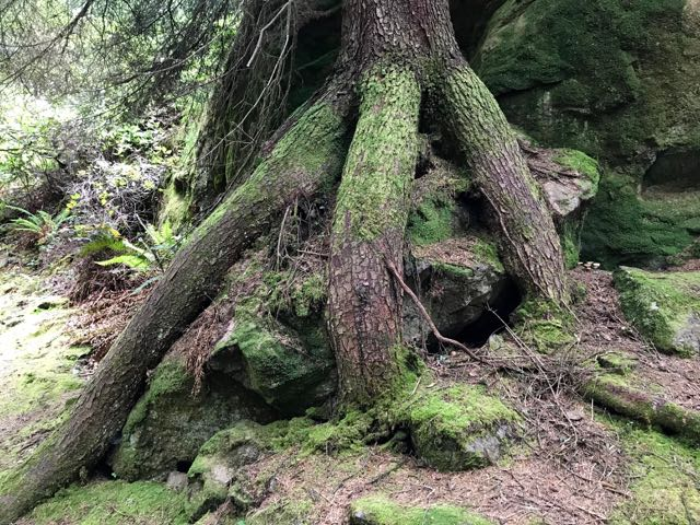 2018 05 20 Redwoods 161