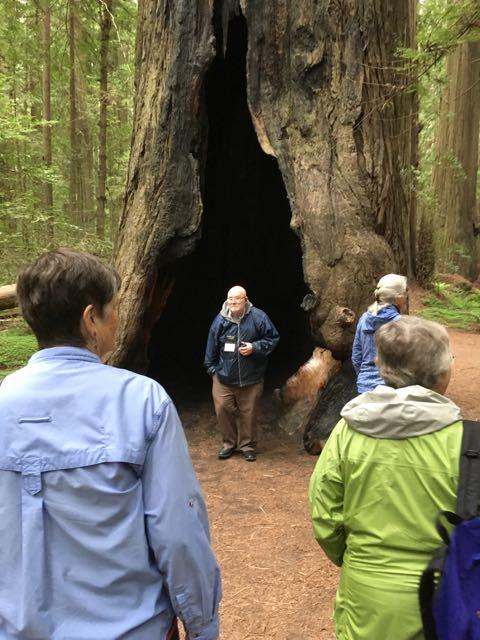 2018 05 20 Redwoods 21