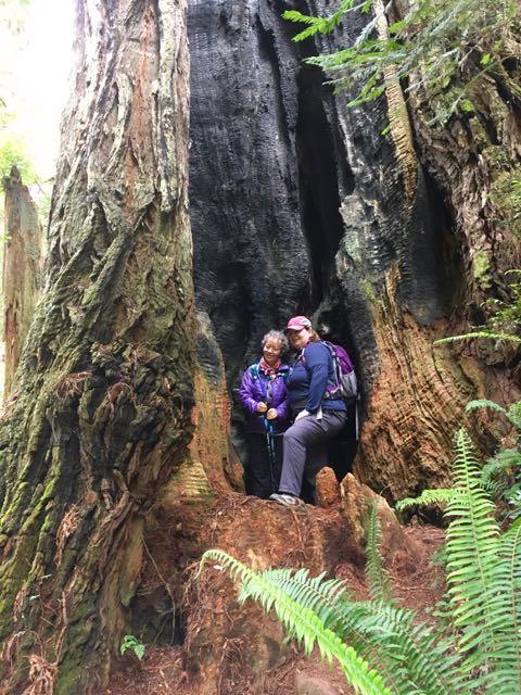 2018 05 20 Redwoods 236