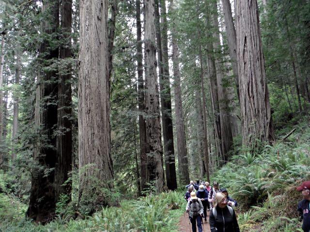 2018 05 20 Redwoods 245