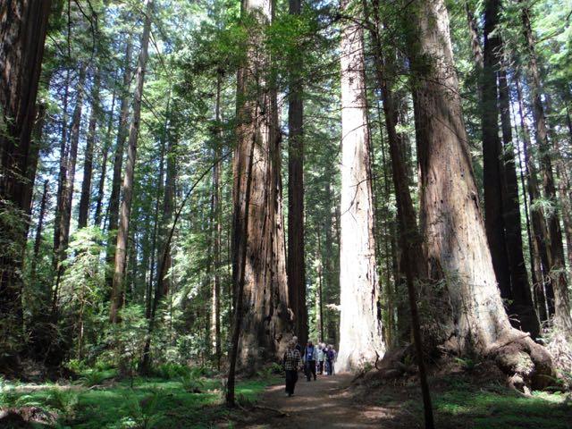 2018 05 20 Redwoods 27