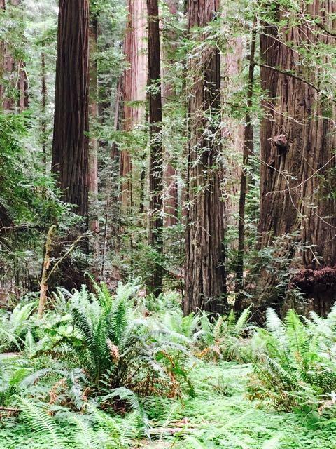 2018 05 20 Redwoods 33