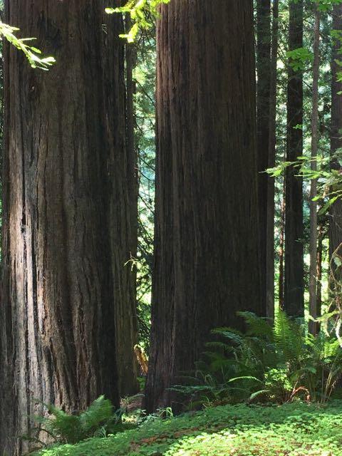 2018 05 20 Redwoods 46