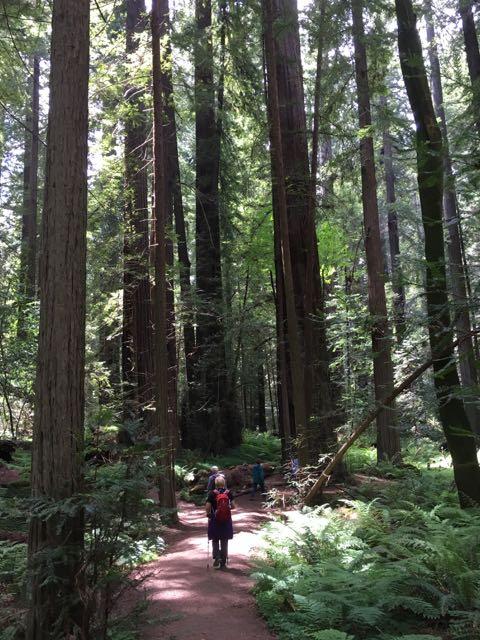 2018 05 20 Redwoods 56