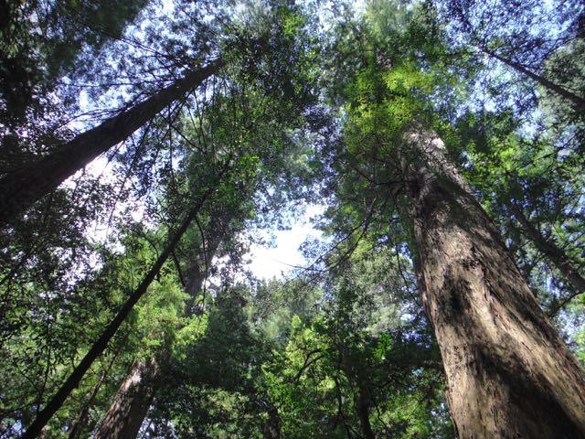 2018 05 20 Redwoods 70