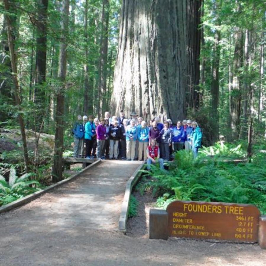 2018 06 03 Redwoods 1