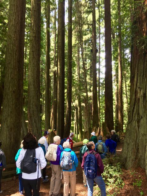 2018 06 03 Redwoods 118