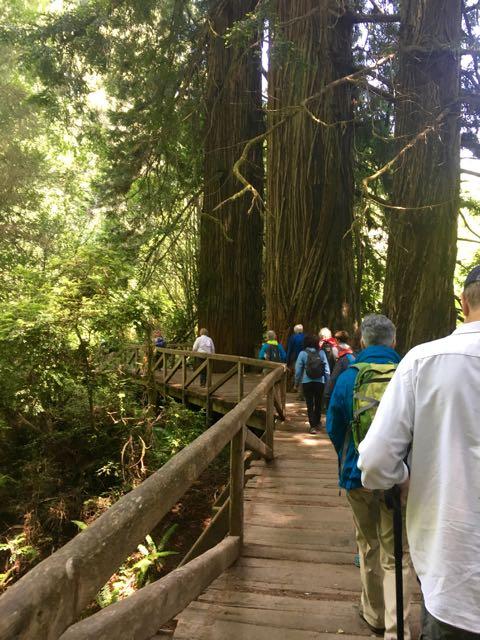 2018 06 03 Redwoods 274