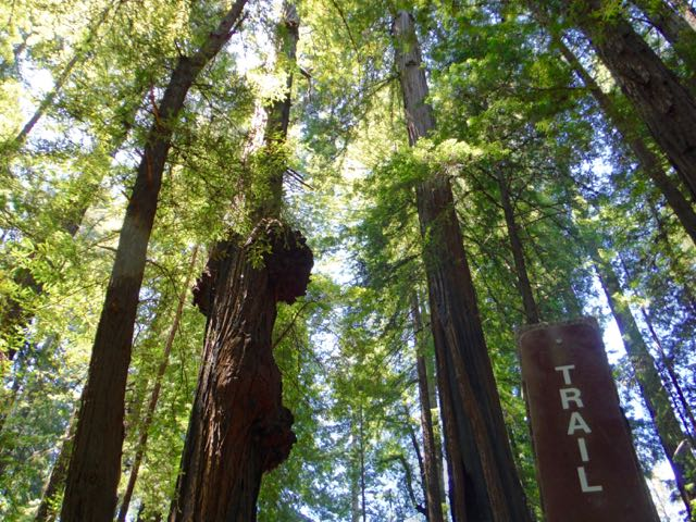 2018 06 03 Redwoods 48
