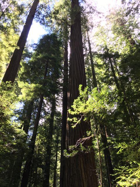 2018 06 14 Redwoods 13