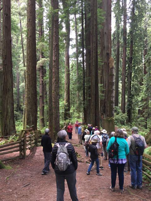 2018 06 14 Redwoods 134