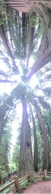 2018 06 14 Redwoods 137