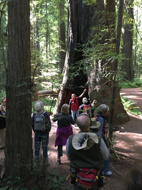 2018 06 14 Redwoods 20