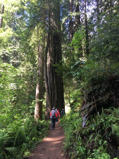 2018 06 14 Redwoods 259