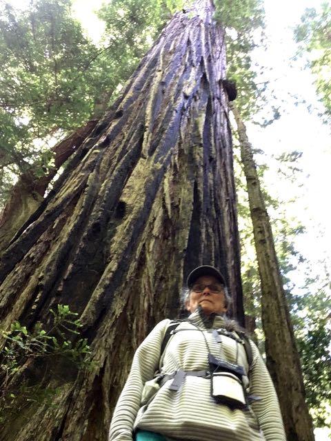 2018 06 14 Redwoods 261