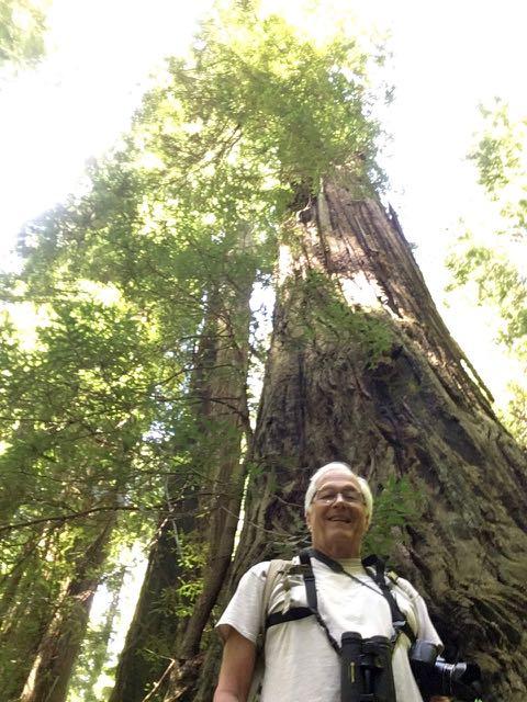 2018 06 14 Redwoods 267