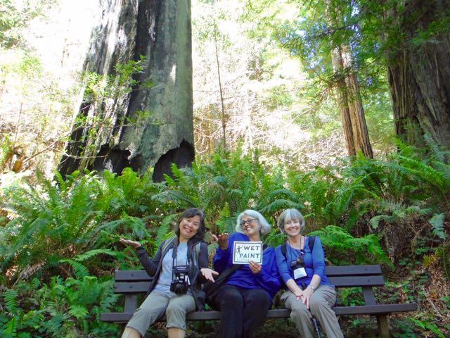 2018 06 14 Redwoods 274