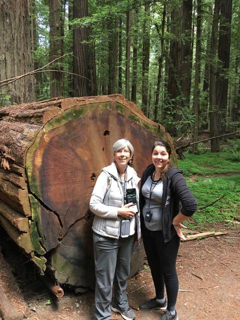 2018 06 14 Redwoods 35